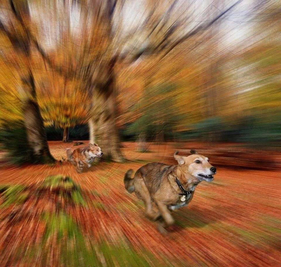 Run Boy Run…