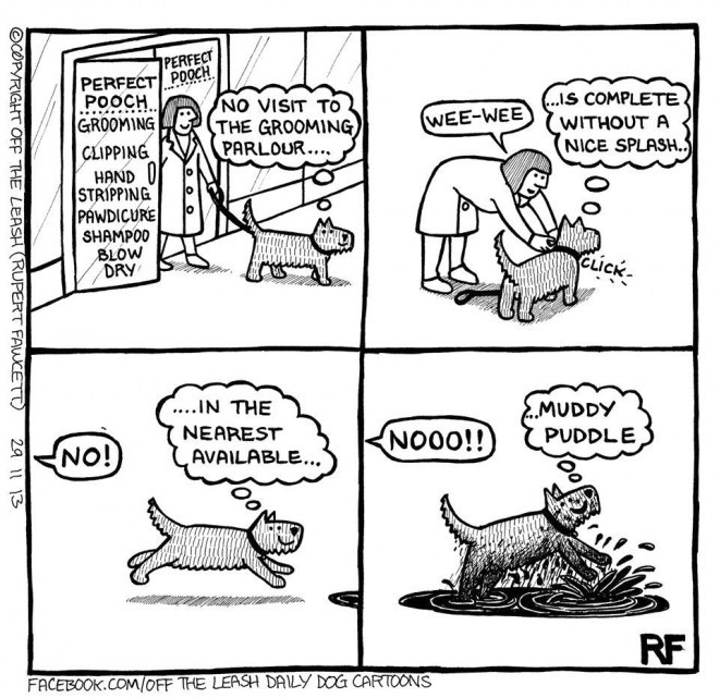 After The Grooming Parlour © 2014 Off The Leash Dog Cartoons by Rupert Fawcett