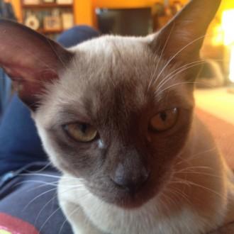 A CAT…