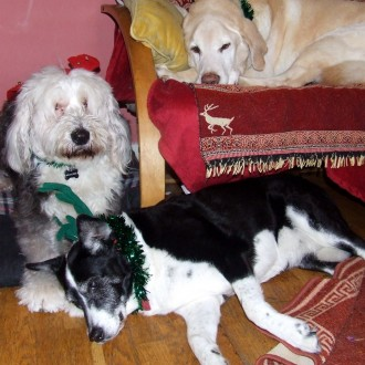 Chloe, Shiloh and Izzy Official Xmas Photo