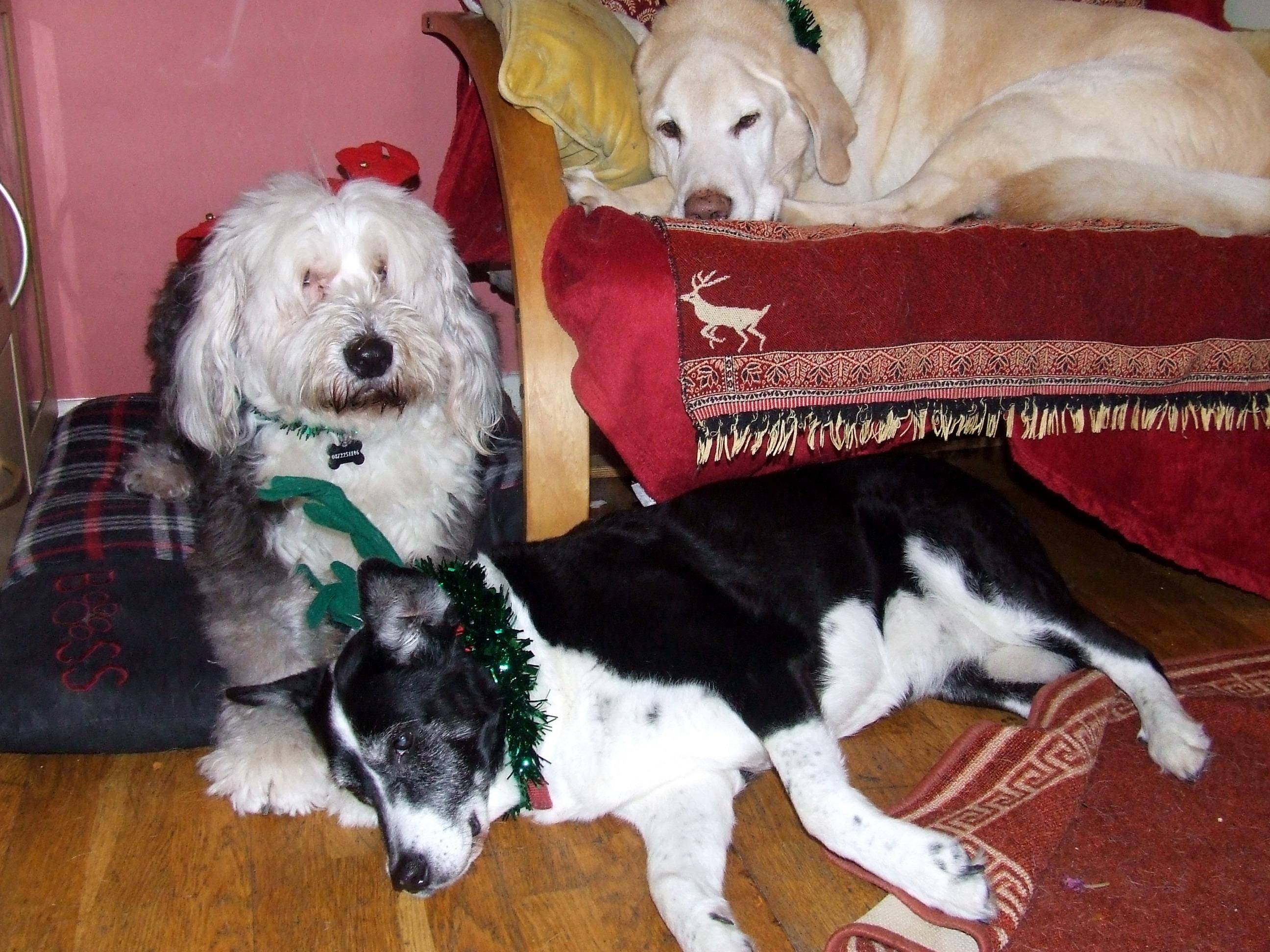 Chloe, Shiloh and Izzy Official Xmas Photo