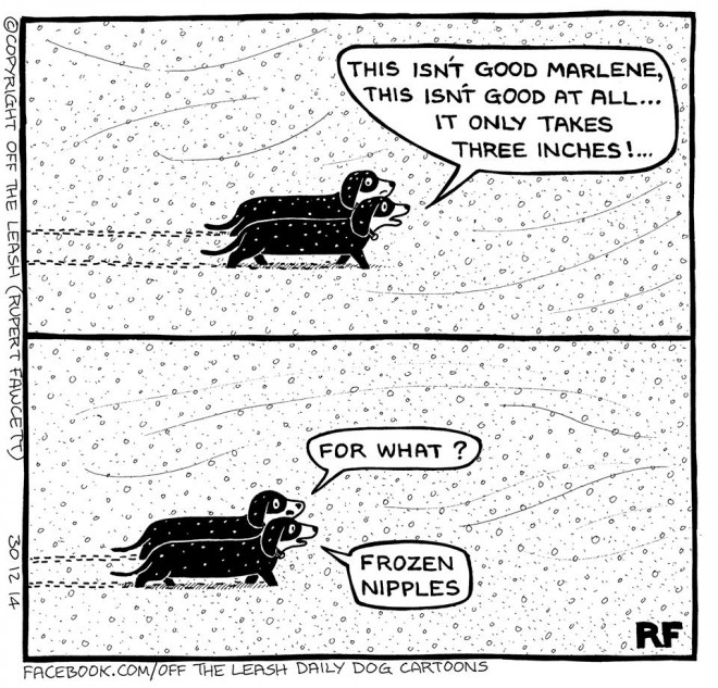 © Off The Leash Dog Cartoons / Rupert Fawcett Dachshunds in the Snow...