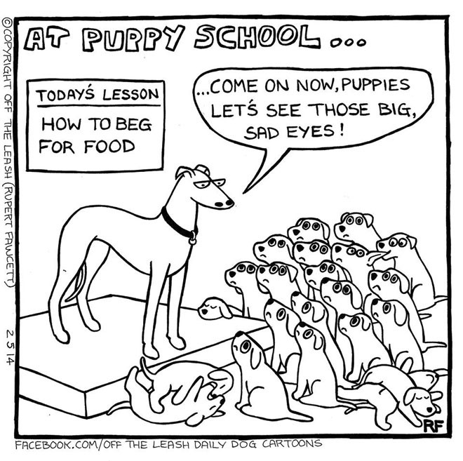 Puppy School - Beg For Food, Off The Leash Dog Cartoons