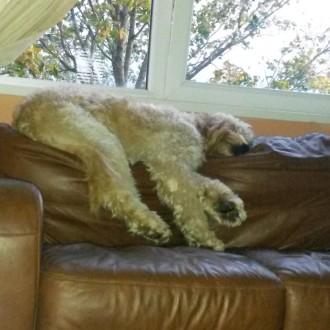 Watson having a nap!
