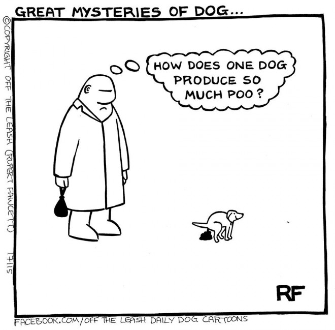 Great Mysteries of Dog