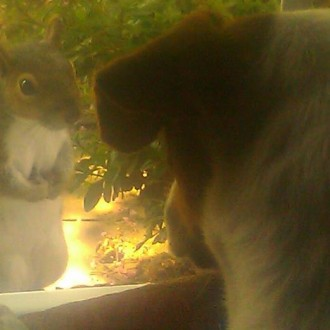 Penelope and the squirrel, eye to eye.