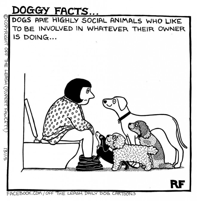 Dogs Are Highly Social Animals