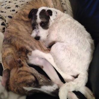 Daisy & Dexter, best friends
