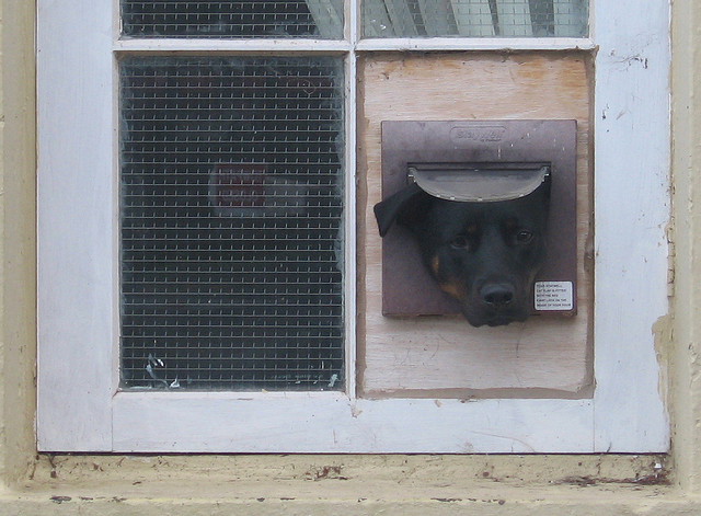 Dog & Cat Flap
