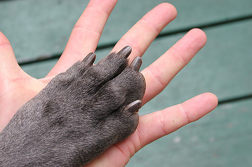 Human Hand / Dog Paw
