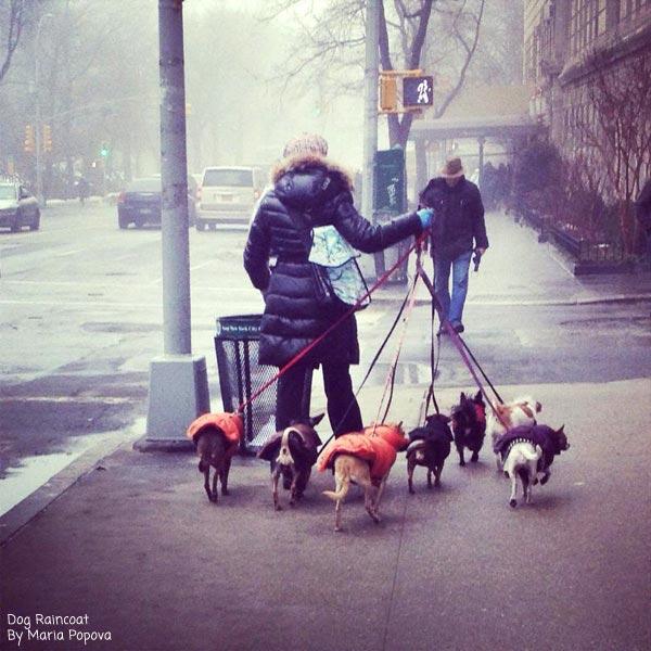 Dog Raincoat Off The Leash Dog Cartoons