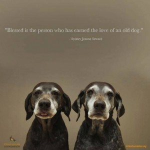 Old Dogs Are The Best - Gene Weingarten