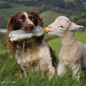 Secret Life of Dogs ITV