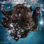Under Water Puppies by Seth Casteel