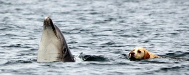 Dog & Dolphin
