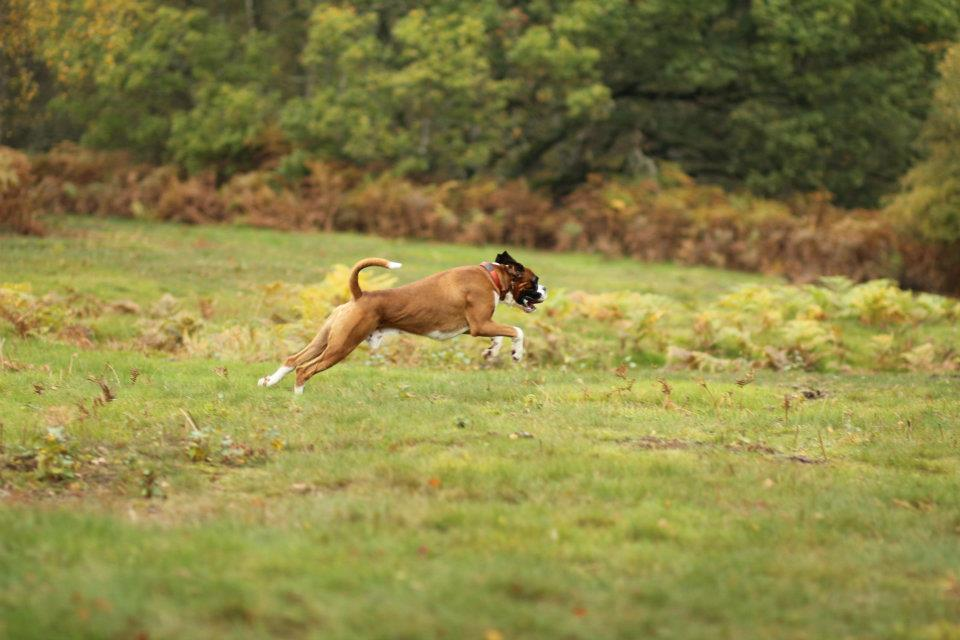 Max the flying Boxer :o)