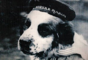 10 Heartwarming Dog Stories From History