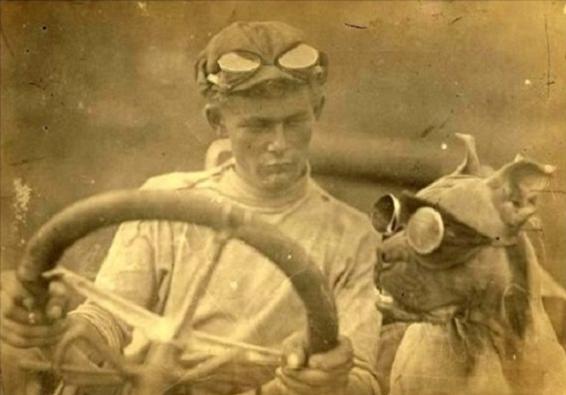 Bud was known for his fearlessness and his awesome canine driving goggles Credit - hypescience.com