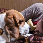 Dog & Owner Credit: Igor Normann, Shutterstock