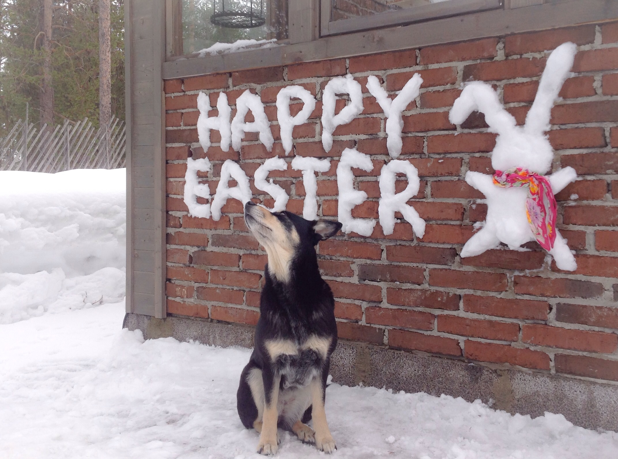 Have you seen a easter bunny?
