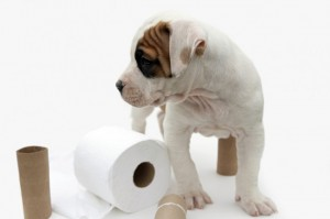 How to House-Train a Puppy