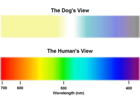 Dogs can still see colours, just less of them
