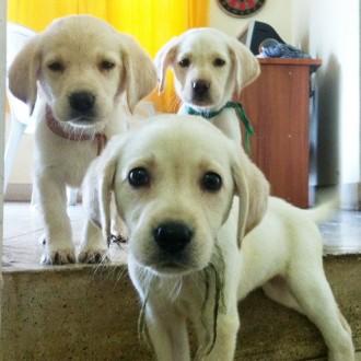 MnM Pups
