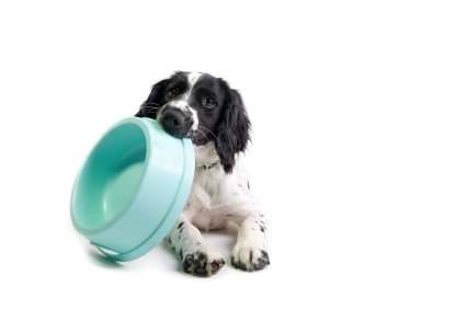 dog-with-bowl-in-mouth
