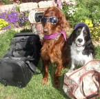 Have a Fun and Safe Vacation with Your Canine Companions