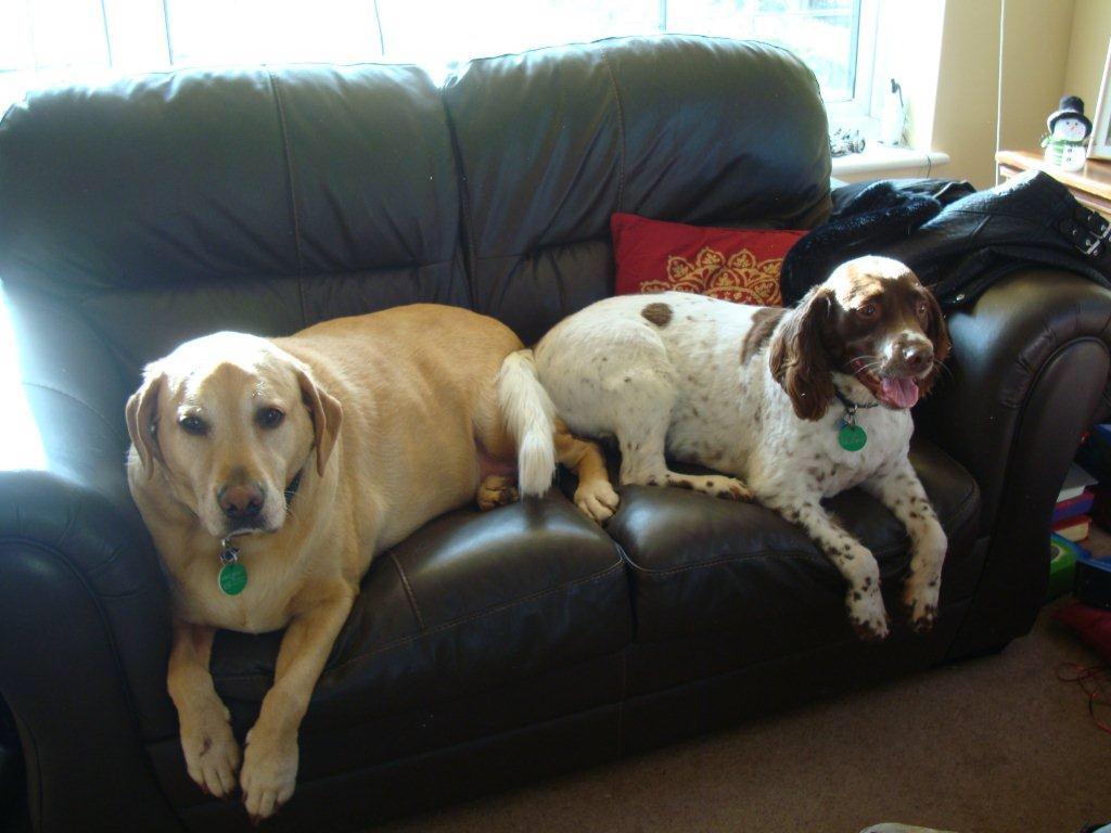 Murphy & Oscar