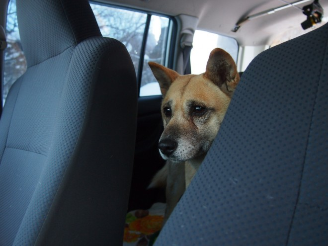 Dog in Car - taken by Yoichiro Haga via Flickr/Creative Commons Search: