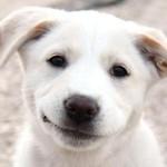 Smiling Dog. Source - photo8