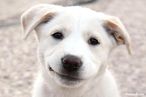 Smiling Dog. Source - photo8