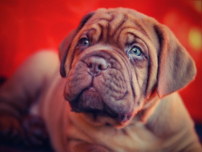puppy-via_pixabay