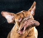 This Photographer Takes Photos of Dogs Mid Drool-Shake and It's Brilliant