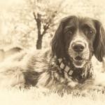 dog-via-pixabay