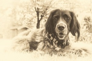 10 Amazing Ways To Remember Your Deceased Dog