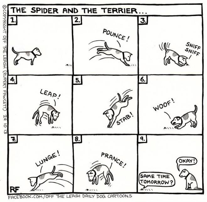 The Spider and The Terrier