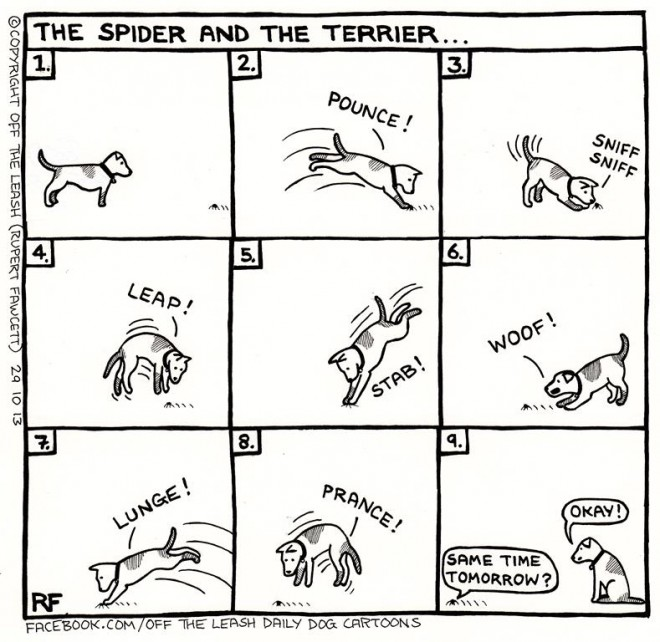 © Off The Leash Dog Cartoons / Rupert Fawcett The Spider & The Terrier