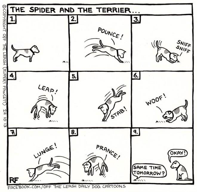 © Off The Leash Dog Cartoons / Rupert Fawcett The Spider & The Terrier