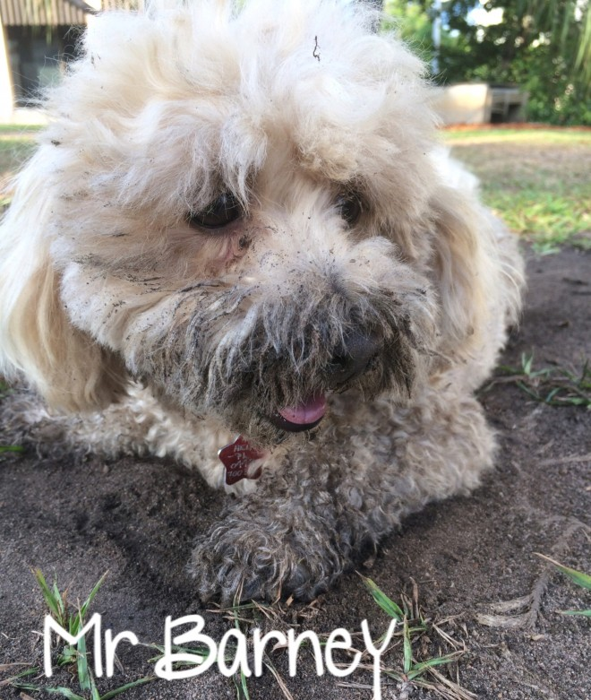 Mr Barney Gets down & dirty