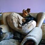 Suzie & Bobby (4)