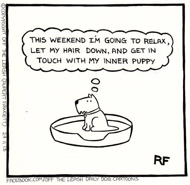 © 2017 Rupert Fawcett / Off The Leash Dog Cartoons This Weekend!