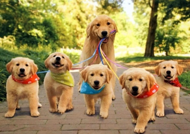Adorable Dogs